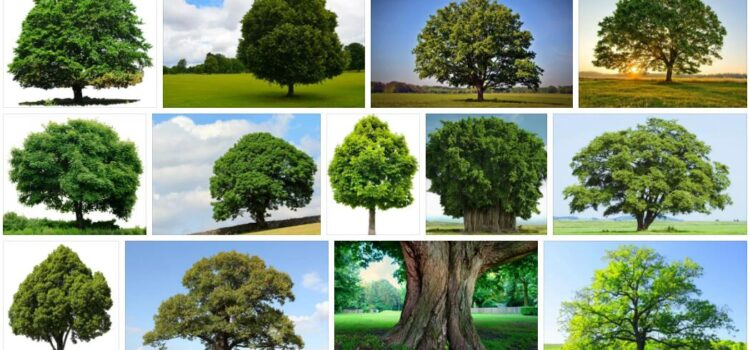 Meaning of Tree